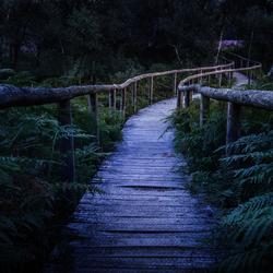 De weg naar paarse heide