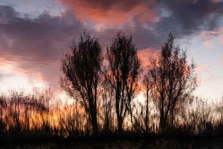 Willows - Wilgen bij sunset.