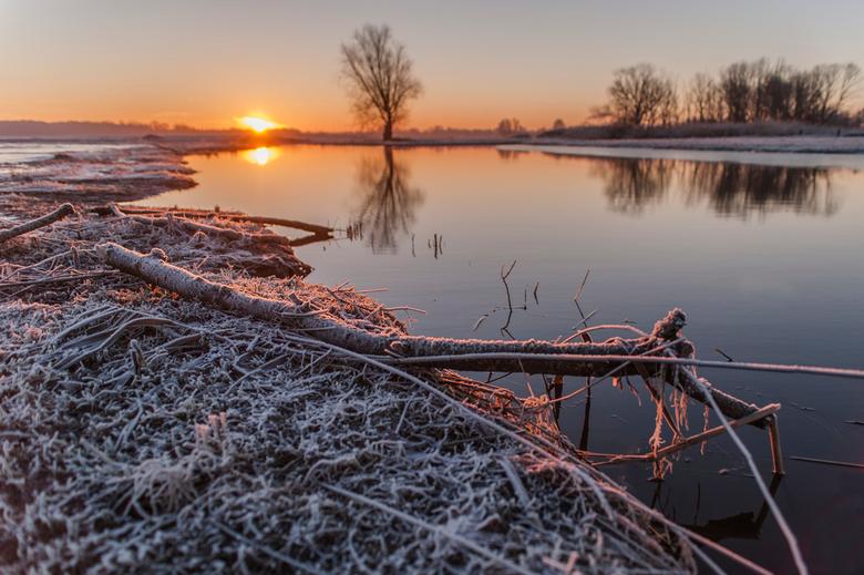 Koude ochtend in de Biesbosch -