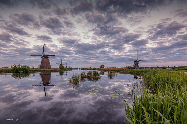 Dutch Reflections
