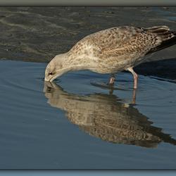 Spiegeltje, spiegeltje.......
