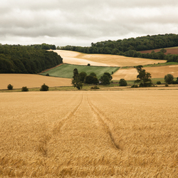 the Cotswolds II - the gentle landscape