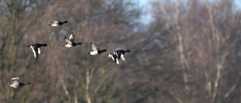 flying frenzy