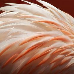 De Flamingo buigt