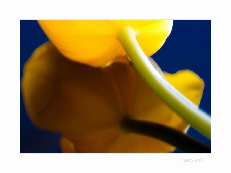 Tulp creatie(f) 6 - Vervolg van de opdracht creatieve tulpen. Variatie op eerdere upload. Ook weer niet scherp, maar samen met spiegeling was dat juis