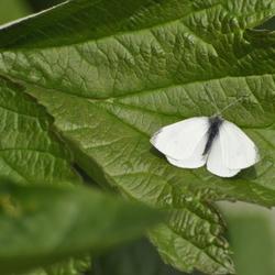 vervolg van de vorige upload een mooie vlinder op een blad