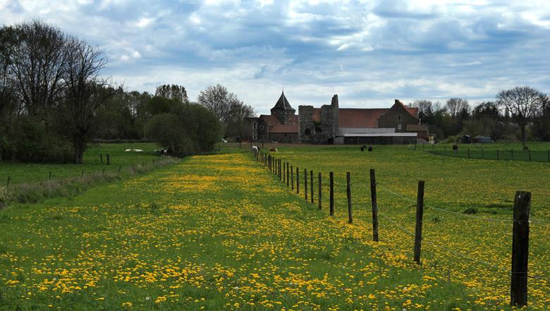Dandelion - Grâce-Hollogne - Dandelion - Grâce-Hollogne <br /> <br /> in de buurt (aan de zuidkant)<br /> rondom Liège maar dan wel al<br /> uit h