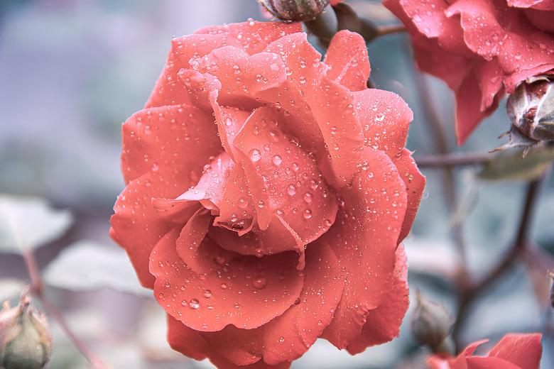 Roos - Lekker klungelen in de tuin, I Love It!