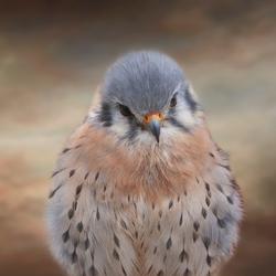 Fly like a Falcon