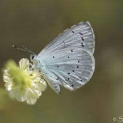 Papieren vleugels