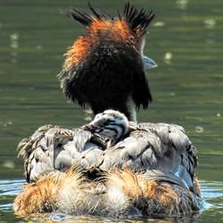 Tussen moeders vleugels