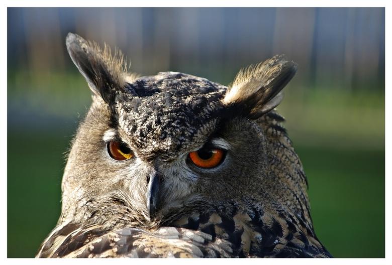 ik heb je door... - De roofvogelshow op de Wouwse plantage was een prachtige kennismaking met deze mooie vogels die ik helaas nooit in het wild tegenk