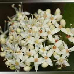 Kleine bloemtjes