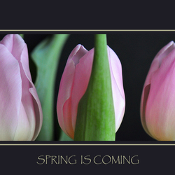 Spring is coming-2