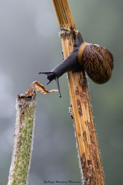 1-2-3... spring?? - Het groene stokje zag er aantrekkelijker uit, maar het was een onmogelijke afstand voor een slak, ik had met met hem of haar te do
