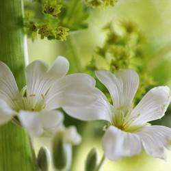 wilde bloemetjes