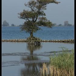 Eenzame boom in laag water