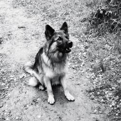 Nog een plaatje van de hond #2
