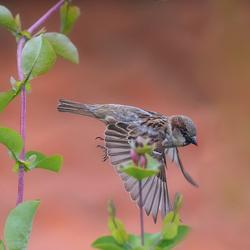vliegend in onze tuin