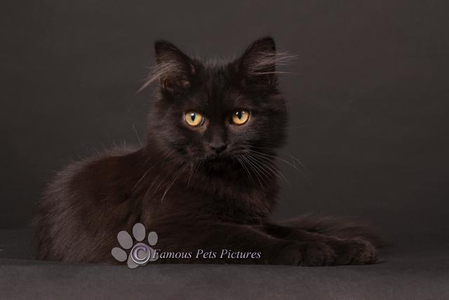 """Jethro 'Beautiful black' - Jethro kwam bij ons in huis als pleegkitten samen met zijn zusje. Hij heeft ons helemaal ingepakt <img  src=""""/images/smiley"""