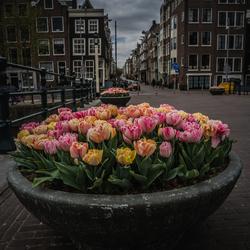 Lockdown Amsterdam