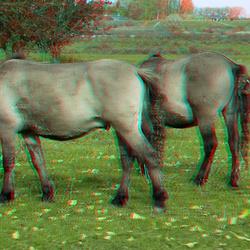 Konikpaarden Munninkenland Woudrichem 3D