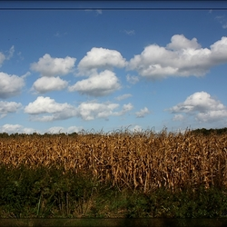 Corn will not pop ...