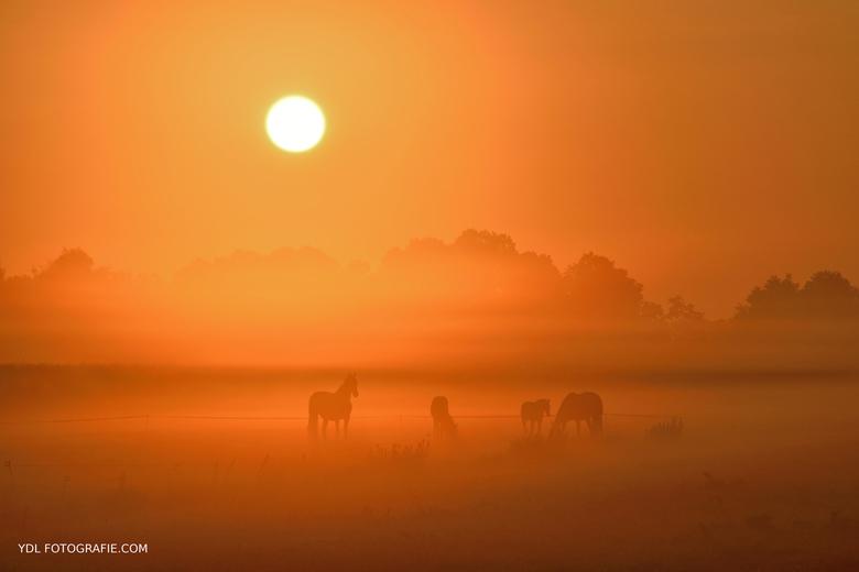 Paarden in de mist -