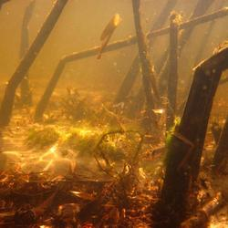 Onderwater (4)