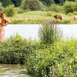 wilde paarden in natuurgebied