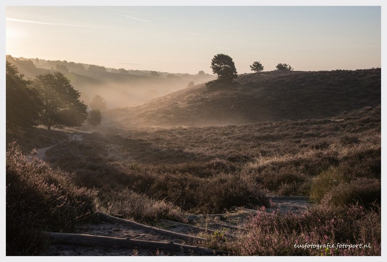 Posbank na zonsopgang - Heidevelden en laaghangende mist op de Posbank kort na zonsopgang