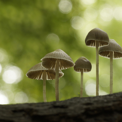 Shrooms in bokeh