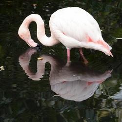 Spiegeltje, spiegeltje aan de wand...........