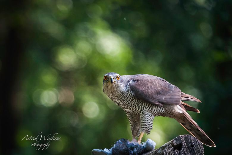I am watching you - Een keer een heel andere foto. Ik ben op zich geen vogelfotograaf maar een dag fotograferen vanuit een vogelhut was toch wel erg l