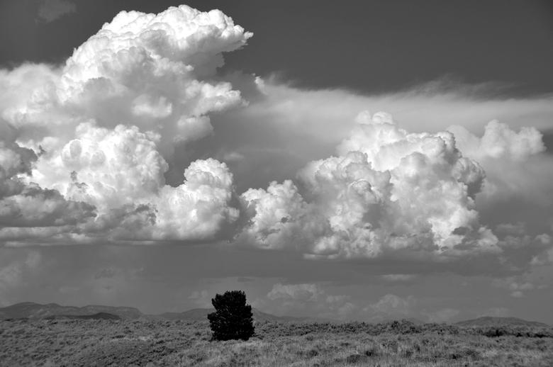 USA: omgeving Grand Tetons - ...