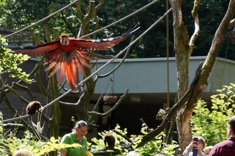 Dagje Apenheul  - Probeerde de papegaaien vast te leggen. Deze vloog op, ik klikte, dus een mazzelshot.
