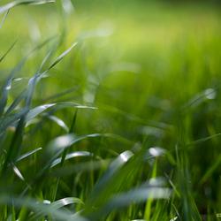Het gras is groener...