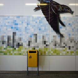 Birds above the city