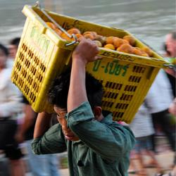 Lao mandarins