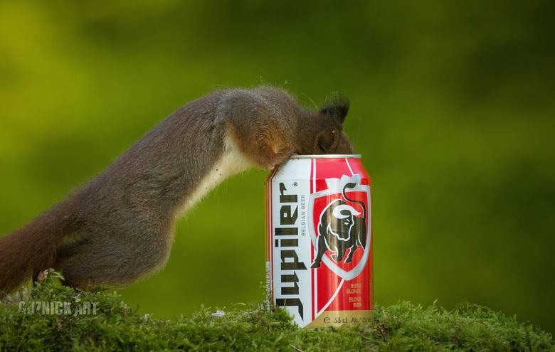 Jupiler  - Eekhoorns waten waarom !