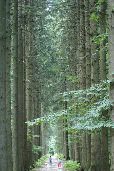 Bomenlaan - Een mooie laan, op een lentedag