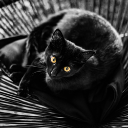 Kitten Lux