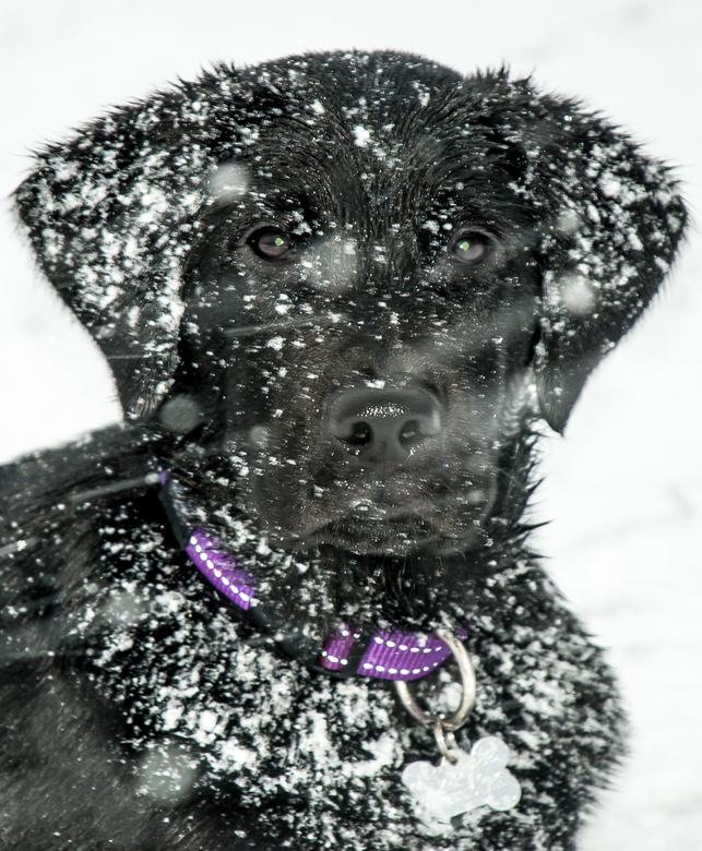 pup_in_de_sneeuw