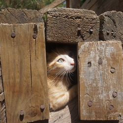 Kitten in Plaka Forest