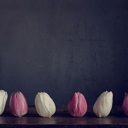 Dans van de tulpen