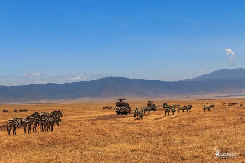 Tanzania - Op safari door de Ngorongoro Crater in Tanzania. Soms moet je goed zoeken om dieren te zien, maar er zijn ook momenten dat je ze in enorme