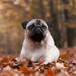 Herfst Shoot met Mormel | Hondenfotografie