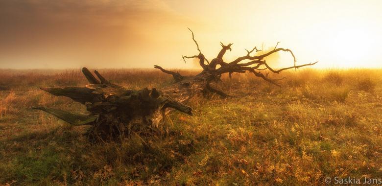 En in de verte burlen de edelherten - Een heerlijke ochtend in het Deererwoud, gisterochtend...