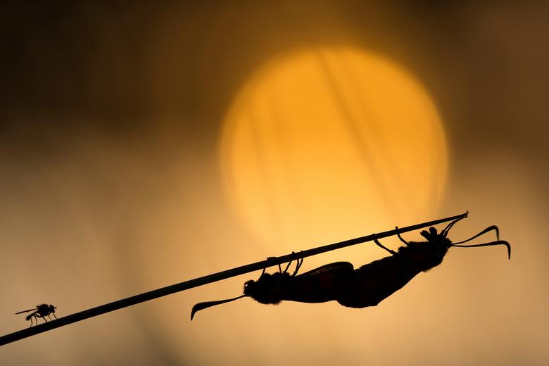 Shilouette bij zonsondergang