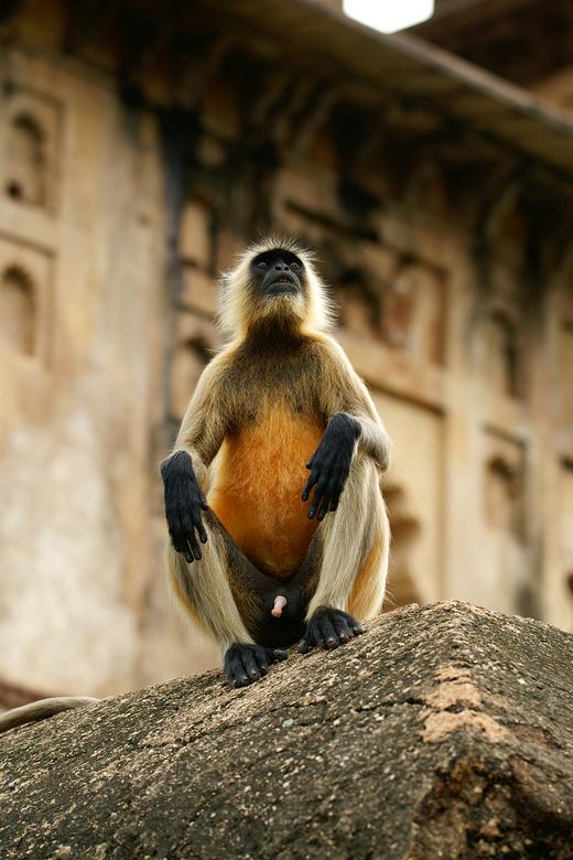 Zulke grote handen.... - Op een muurtje in Orchha, India